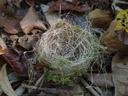 bird's nest. 2005-11-27, Sony Cybershot DSC-F717.
