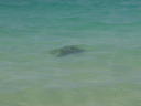 the only photo i got of the sea turtle that was swimming by
