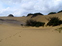 one of fraser island's sand dunes