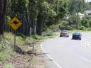 kangaroo street sign. 2005-12-04, Sony Cybershot DSC-F717.