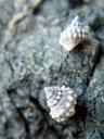 snail-shells. 2005-12-05, Sony Cybershot DSC-F717.