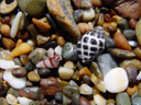 . 2005-12-05, Sony Cybershot DSC-F717. keywords: rocky beach, colorful stones, snailshells, bunte steine, schneckenhäuser