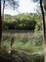 kooloonbung creek nature park. 2005-12-05, Sony Cybershot DSC-F717.