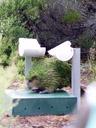first kakapo encounter: ox at his feeding station. 2005-12-20, Sony Cybershot DSC-F717.