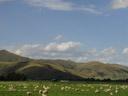 . 2005-12-31, Sony Cybershot DSC-F717. keywords: beaufitul landscape, sheep