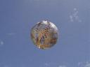 die silber-baumfarn-kugel wiegt 175kg || foto details: 2006-01-03, wellington, new zealand, Sony Cybershot DSC-F717. keywords: silver fern sphere