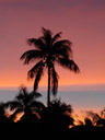 another fijian sunset, palm silhouette. 2006-01-15, Sony DSC-F717.