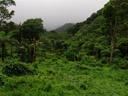 imprenetrable rainforest
