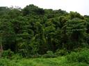 impenetrable rainforest