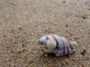 snail-shell. 2006-01-17, Sony DSC-F717.