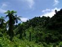 picture-book rainforest. 2006-01-18, Sony DSC-F717.