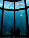 the kelp forest. 2006-01-27, Sony DSC-F717.