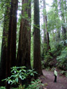 in redwood national park