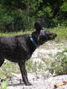 . 2006-06-16, Sony Cybershot DSC-F828. keywords: scully, dog