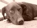 . 2004-04-22, Sony Cybershot DSC-F717. keywords: scully, dog