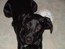 . 2002-11-03, Sony Cybershot DSC-F505. keywords: scully, dog