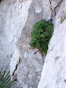 even in this dry climate: individual plants growing on rock faces