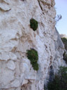 even in this dry climate: individual plants growing on rock faces. 2006-07-25, Sony Cybershot DSC-F828.