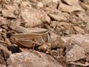 astounding camouflage. 2006-07-25, Sony Cybershot DSC-F828.