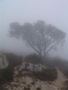 fog. 2006-07-28, Sony Cybershot DSC-F828. keywords: tree