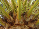 a palm, from below