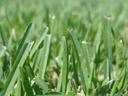 f/2.2, 1/1250 sec. || foto details: 2006-08-01, denia, spain, Sony Cybershot DSC-F828. keywords: depth of field, depth of sharpness, grass, schärfentiefe, tiefenschärfe