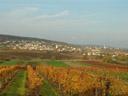 am weg nach eisenstadt || foto details: 2006-10-28, burgenland, austria, Sony Cybershot DSC-F828.