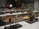 in vertebrate class. 2006-10-12, Sony Cybershot DSC-P93.