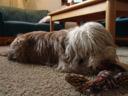 daisy, sebastian's cute dog. 2007-02-10, Sony DSC-F828.