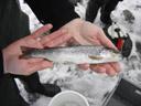 bachforelle (salmo trutta fario) || foto details: 2007-02-13, near braz, austria, Sony DSC-P93.