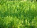 spring-green. 2007-04-14, Sony F828. keywords: grass, green, fresh green, frisches grün