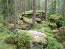 wald || foto details: 2007-06-08, ötz, austria, Sony F828.