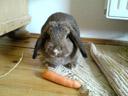 polly the bunny. 2007-06-02, SonyEricsson K750i.