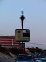 a cell phone tower camouflaged as a palm tree. 2007-08-31, Sony F828.
