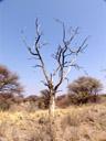 dead tree. 2007-09-01, Sony F828.