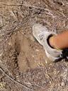 kudu footprint ((tragelaphus strepsiceros). 2007-09-01, Sony F828.