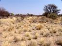 dry grassland. 2007-09-01, Sony F828.
