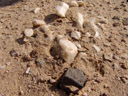 die unterseite von kleinen quarzsteinchen bietet genug licht und feuchtigkeit... || foto details: 2007-09-02, namibia, Sony F828.