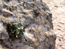 viele flechten || foto details: 2007-09-02, namibia, Sony F828. keywords: lichenes