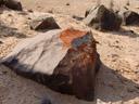 flechten wachsen immer auf der wind-zugewandten seite - in diesem bild: caloplaca elegans || foto details: 2007-09-02, namibia, Sony F828. keywords: xanthoria elegans