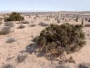 . 2007-09-02, Sony F828. keywords: bush, savannah, dry land