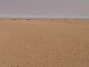 die typische aussicht in der zentralen namib || foto details: 2007-09-03, welwitschia plains, namibia, Sony F828.