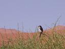 bird on a nara-shrub. 2007-09-05, Sony F828.