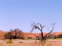 dead trees near sossusvlei. 2007-09-05, Sony F828.