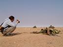 serry takes photos of welwitschia mirabilis. 2007-09-03, Sony F828.
