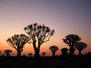 the kokerboom woud (quiver tree forest) at dusk. 2007-09-06, Sony F828. keywords: aloe dichotoma