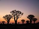 the kokerboom woud (quiver tree forest) at dusk. 2007-09-06, Sony F828. keywords: aloe dichotoma