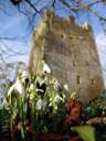 ballaghmore castle and snowdrops (galanthus sp.)