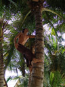 rene climbs coconut-trees