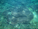 stony corals. 2008-08-25, Pentax W60.
